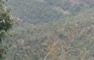 پونچھ کے بچیاں والی میں جنگلات کی کٹائی لمحہ فکریہ